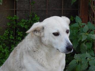 Angel lebte glücklich in Österreich RIP hübsche Maus 19999608ok
