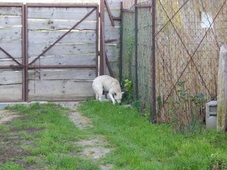 Angel lebte glücklich in Österreich RIP hübsche Maus 19999609gv