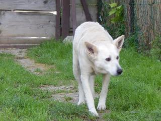 Angel lebte glücklich in Österreich RIP hübsche Maus 19999616pp
