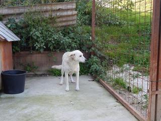 Angel lebte glücklich in Österreich RIP hübsche Maus 19999630mi