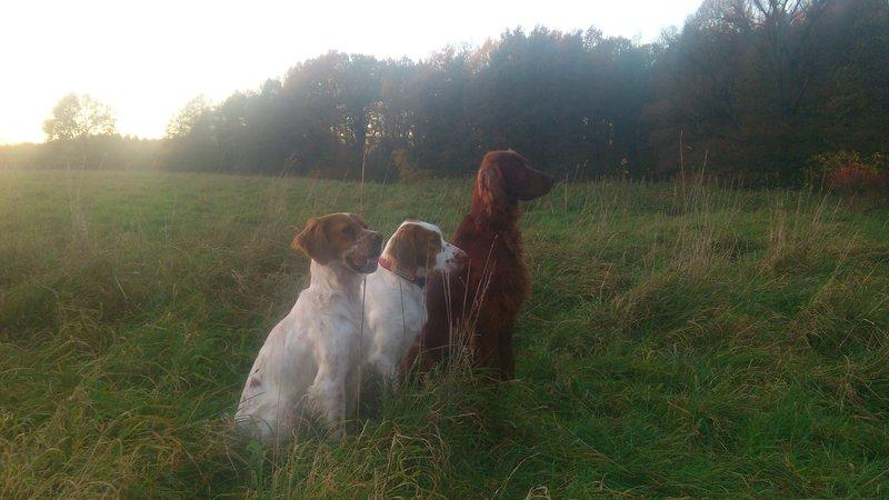 Lucy,Zuma und Pancho, die Setterbande vom Taucherwald 20071462ht