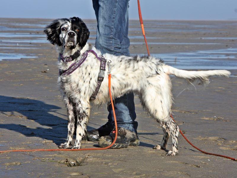 Bildertagebuch - Ginger lebt jetzt als Dauerpflegehund bei ihrer Pflegefamilie 20227622rw
