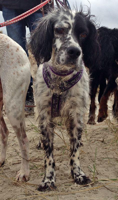 Bildertagebuch - Ginger lebt jetzt als Dauerpflegehund bei ihrer Pflegefamilie 20227627ge