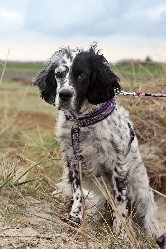 Bildertagebuch - Ginger lebt jetzt als Dauerpflegehund bei ihrer Pflegefamilie 20227629dd