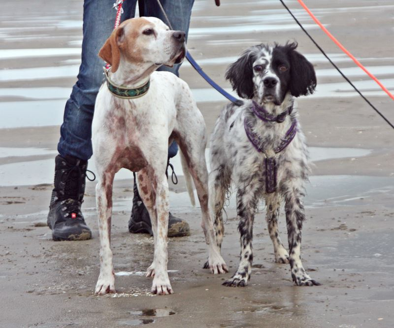 Bildertagebuch - Ginger lebt jetzt als Dauerpflegehund bei ihrer Pflegefamilie 20227630uh