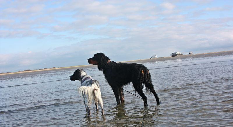 Bildertagebuch - Ginger lebt jetzt als Dauerpflegehund bei ihrer Pflegefamilie 20227631lm