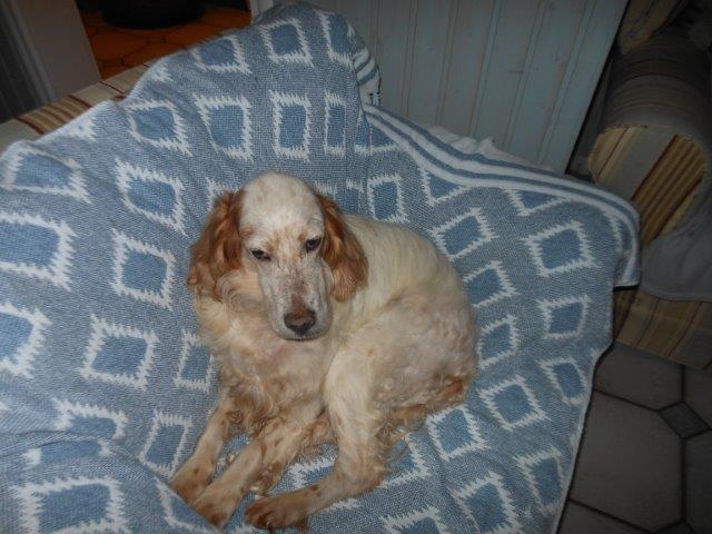 Herzliche Grüße von den HPiN Hunden Regina-jetzt Ina-, Baco, Flora und Luna  20407098yw