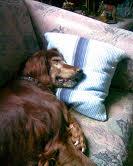 Herzliche Grüße von den HPiN Hunden Regina-jetzt Ina-, Baco, Flora und Luna  20407103wy