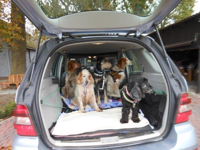 Herzliche Grüße von den HPiN Hunden Regina-jetzt Ina-, Baco, Flora und Luna  20407106th