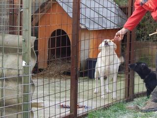 Angel lebte glücklich in Österreich RIP hübsche Maus 20476695dm