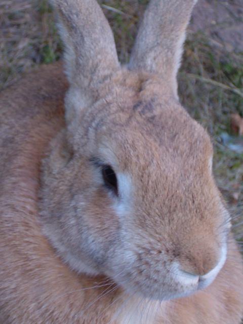 Faerybeads Mystical Hares 20479706jg