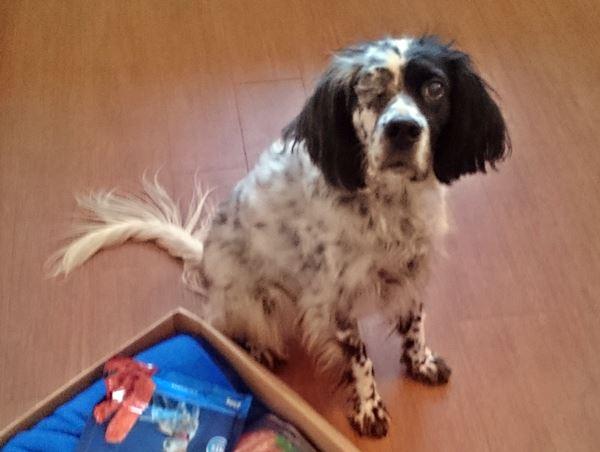 Bildertagebuch - Ginger lebt jetzt als Dauerpflegehund bei ihrer Pflegefamilie 20500911cc