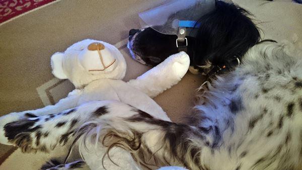 Bildertagebuch - Ginger lebt jetzt als Dauerpflegehund bei ihrer Pflegefamilie 20501002vw