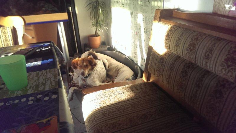 Mika (Tobias) ist angekommen  20612244yr