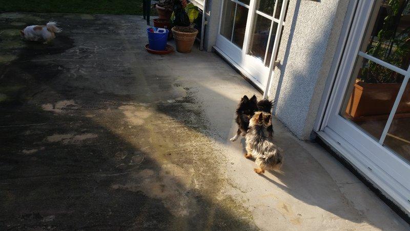 Milli ist zu Hause angekommen - Seite 8 20917868sq