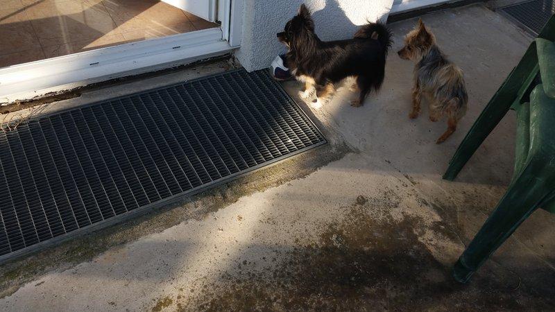 Milli ist zu Hause angekommen - Seite 8 20917877ri