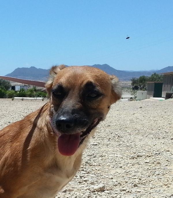 Bildertagebuch - Mona, die hübsche kleine Hündin...hat in SPANIEN IHR ZUHAUSE GEFUNDEN! 20918299jq
