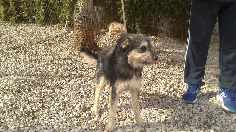 Bildertagebuch - Nepomuk, der verschmuste, braun-schwarzer Terrier Mischling...in Spanien sein ZUHAUSE GEFUNDEN! 20951456hr