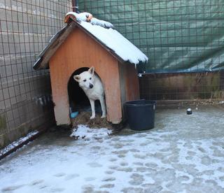 Angel lebte glücklich in Österreich RIP hübsche Maus 20967211ow