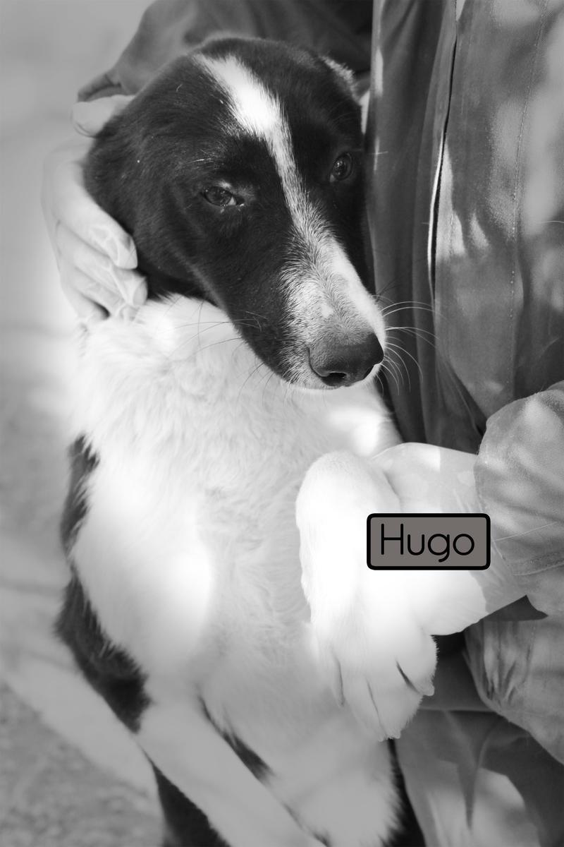 Bildertagebuch - Hugo, der verspielte Lausbub... ein echter Kumpel - hat sein ZUHAUSE IN SPANIEN GEFUNDEN! 20984899wq