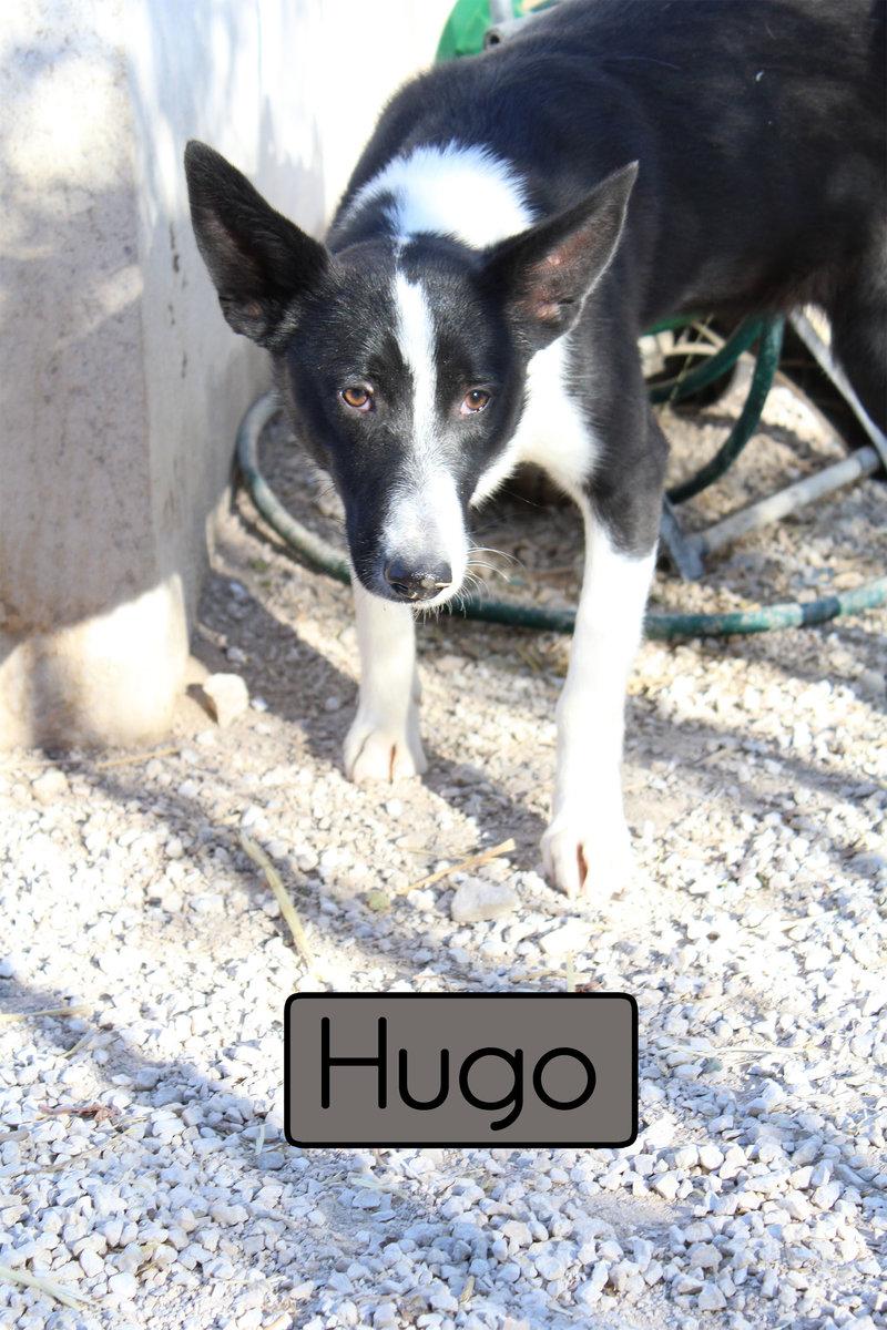 Bildertagebuch - Hugo, der verspielte Lausbub... ein echter Kumpel - hat sein ZUHAUSE IN SPANIEN GEFUNDEN! 21035267os