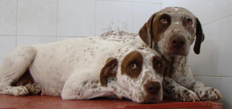 Bildertagebuch -  MARTA und MARIA kamen zusammen ins Rescue von Alicante..... 21045335me