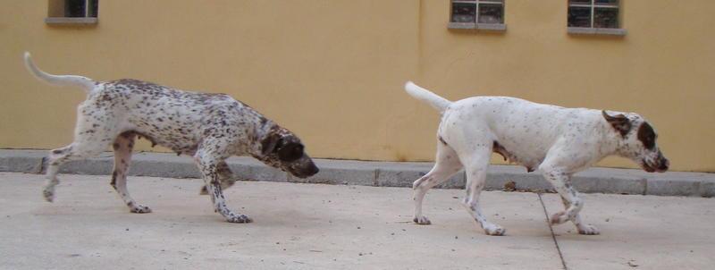 Bildertagebuch -  MARTA und MARIA kamen zusammen ins Rescue von Alicante..... 21045339zy