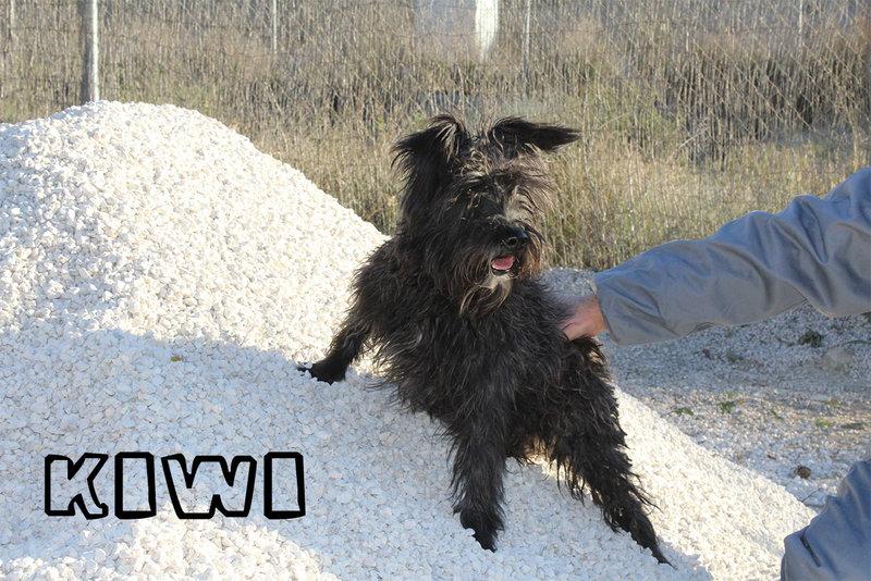 Bildertagebuch - KIWI, lustiger kleine Knopf mit Bart... sucht Spielgefährten fürs Leben! - in Spanien ZUHAUSE GEFUNDEN! 21086948fq
