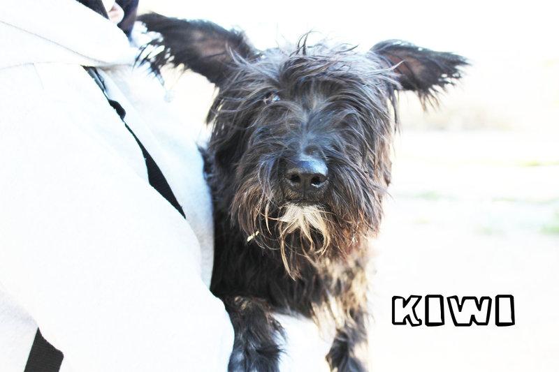 Bildertagebuch - KIWI, lustiger kleine Knopf mit Bart... sucht Spielgefährten fürs Leben! - in Spanien ZUHAUSE GEFUNDEN! 21086950bd