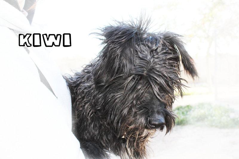 Bildertagebuch - KIWI, lustiger kleine Knopf mit Bart... sucht Spielgefährten fürs Leben! - in Spanien ZUHAUSE GEFUNDEN! 21086952jk