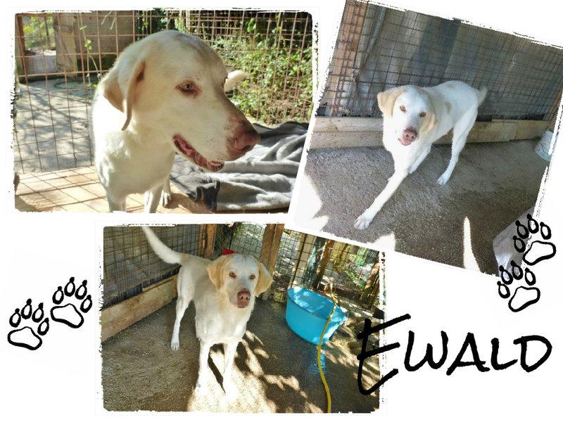 Bildertagebuch - EWALD (nun Jonne), besonderer Hund sucht besondere Menschen...VERMITTELT! 21157286eq