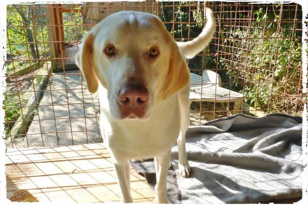 Bildertagebuch - EWALD (nun Jonne), besonderer Hund sucht besondere Menschen...VERMITTELT! 21157287wz