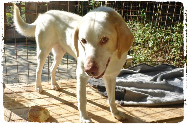 Bildertagebuch - EWALD (nun Jonne), besonderer Hund sucht besondere Menschen...VERMITTELT! 21157288uv