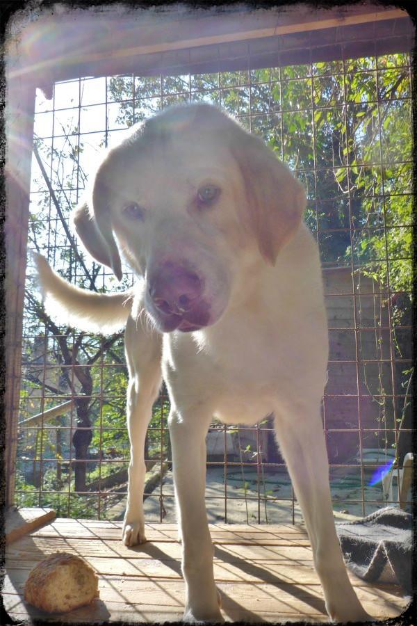 Bildertagebuch - EWALD (nun Jonne), besonderer Hund sucht besondere Menschen...VERMITTELT! 21157289rv