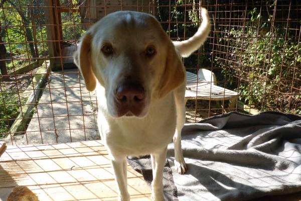 Bildertagebuch - EWALD (nun Jonne), besonderer Hund sucht besondere Menschen...VERMITTELT! 21157290ya