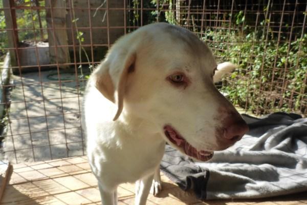 Bildertagebuch - EWALD (nun Jonne), besonderer Hund sucht besondere Menschen...VERMITTELT! 21157291je