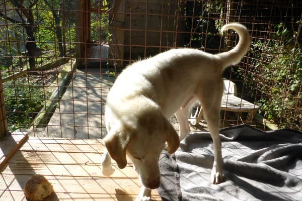 Bildertagebuch - EWALD (nun Jonne), besonderer Hund sucht besondere Menschen...VERMITTELT! 21157293eb