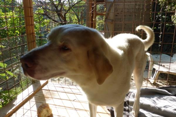 Bildertagebuch - EWALD (nun Jonne), besonderer Hund sucht besondere Menschen...VERMITTELT! 21157294uy