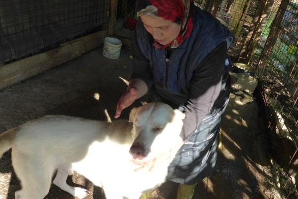 Bildertagebuch - EWALD (nun Jonne), besonderer Hund sucht besondere Menschen...VERMITTELT! 21157297fo
