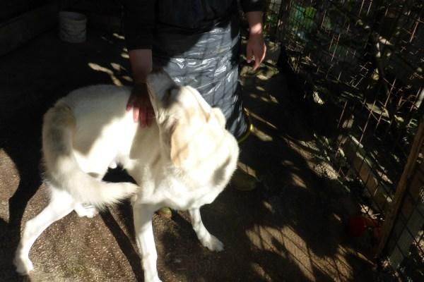 Bildertagebuch - EWALD (nun Jonne), besonderer Hund sucht besondere Menschen...VERMITTELT! 21157298wk