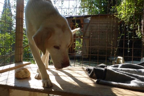 Bildertagebuch - EWALD (nun Jonne), besonderer Hund sucht besondere Menschen...VERMITTELT! 21157305xp