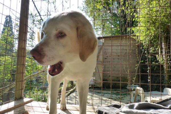 Bildertagebuch - EWALD (nun Jonne), besonderer Hund sucht besondere Menschen...VERMITTELT! 21157306ls