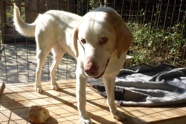 Bildertagebuch - EWALD (nun Jonne), besonderer Hund sucht besondere Menschen...VERMITTELT! 21157312sx