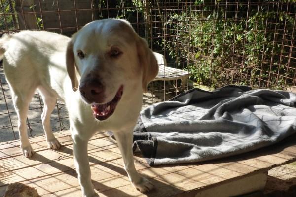 Bildertagebuch - EWALD (nun Jonne), besonderer Hund sucht besondere Menschen...VERMITTELT! 21157313cc