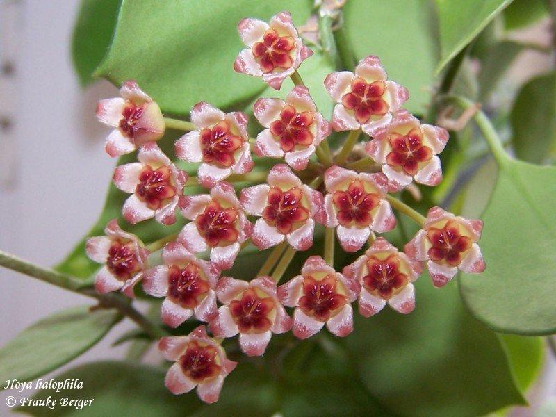 Blüten 2015 21271430dj