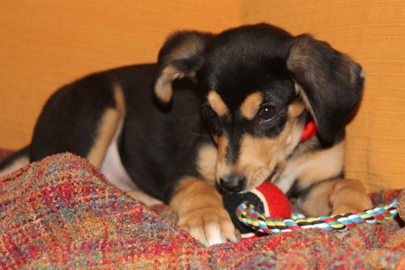 Bildertagebuch - Atenea, niedliche Welpenmaus... hatte keinen schönen Start ins Leben - hat in SPANIEN ihr ZUHAUSE GEFUNDEN! 21350411np