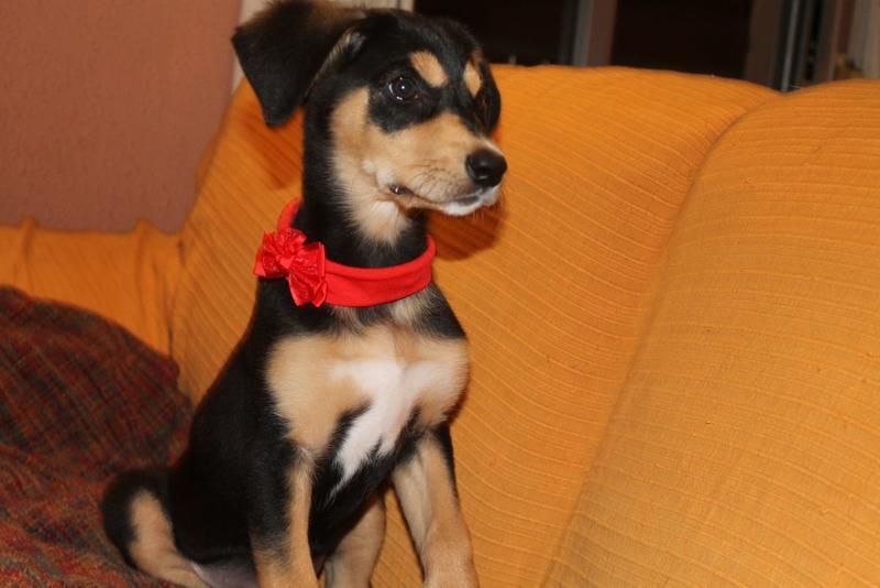 Bildertagebuch - Atenea, niedliche Welpenmaus... hatte keinen schönen Start ins Leben - hat in SPANIEN ihr ZUHAUSE GEFUNDEN! 21350418nt