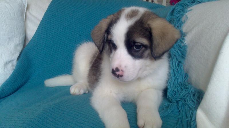 Bildertagebuch - Zarina, entspanntes Hundekind hat immer ein Lächeln auf dem Gesicht ...  21383562bc