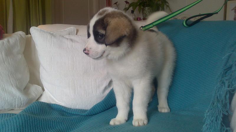 Bildertagebuch - Zarina, entspanntes Hundekind hat immer ein Lächeln auf dem Gesicht ...  21383569aw