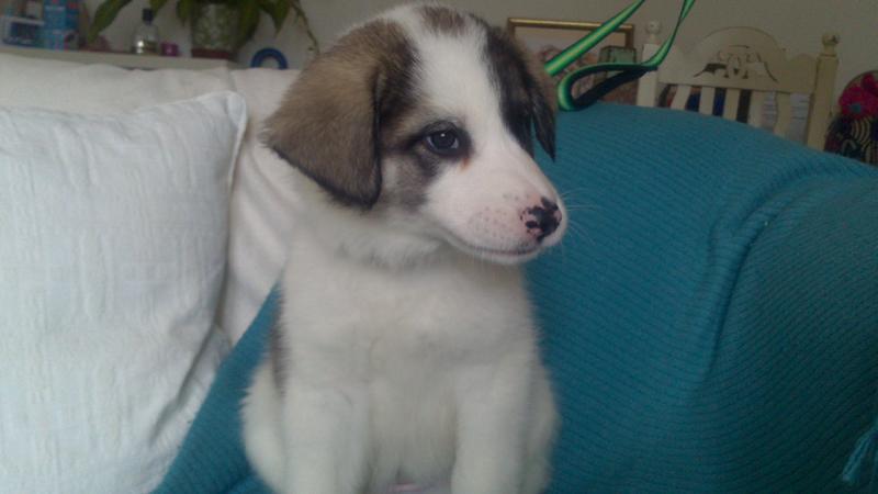 Bildertagebuch - Zarina, entspanntes Hundekind hat immer ein Lächeln auf dem Gesicht ...  21383570ss